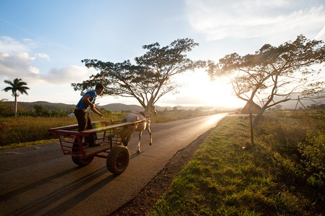 Cuba, Boy, Horse, Sunset, Trees, Road, Cart, Transportation,