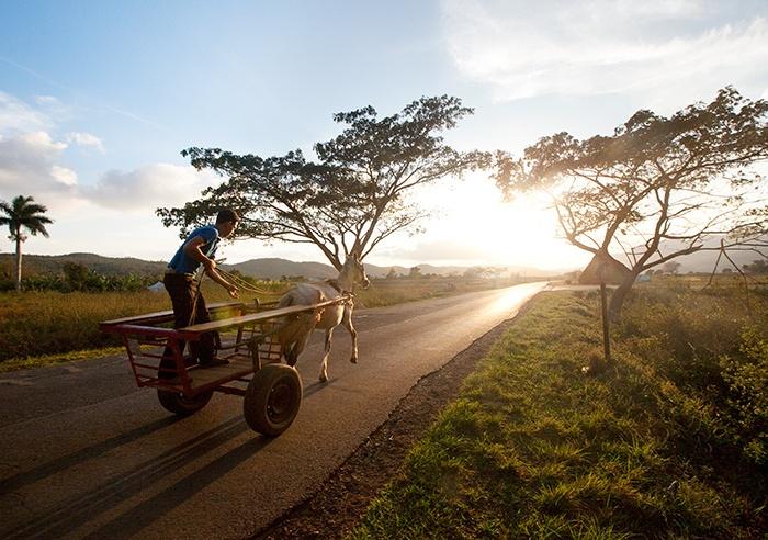 Cuba, Boy, Horse, Sunset, Trees, Road, Cart, Transportation,