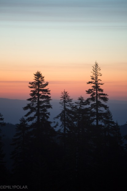 Pine trees silouette the horizon at sunrise in Shasta Wilderness.