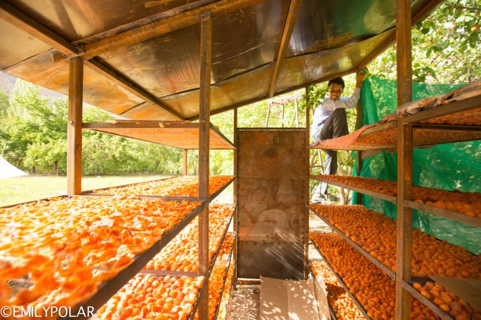 Tashi from LEDO building apricot drying racks in Takmachik village.