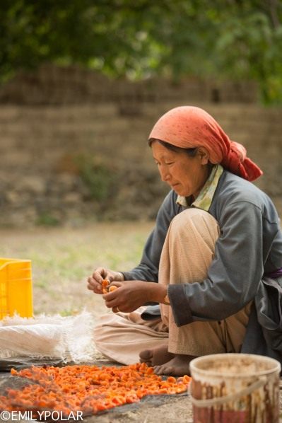 Local women in the village of Takmachik break apricots open for drying.
