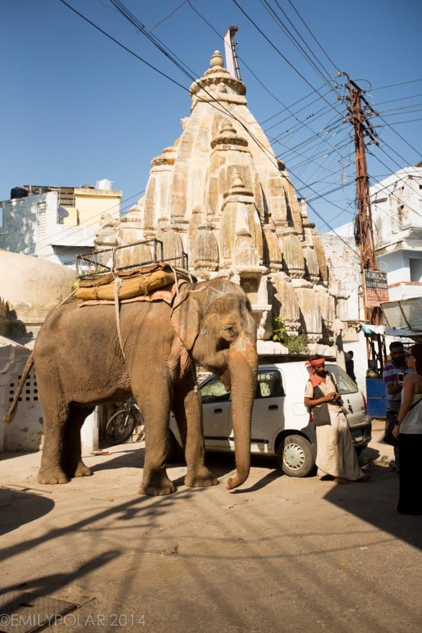 Udaipur_141126-642