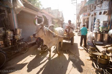 Jodhpur_141129-13