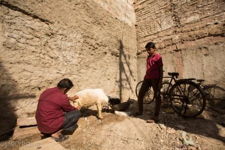 Jodhpur_141129-155
