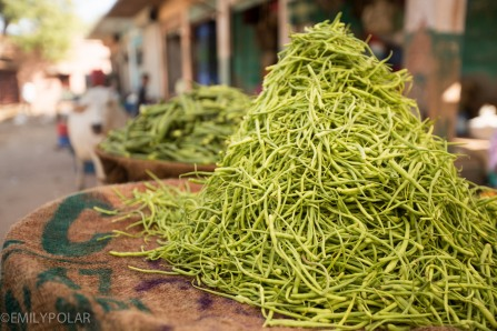 Green beans unique to Rajasthan, India.