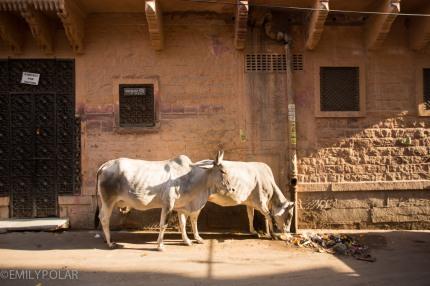 Jodhpur_141130-4