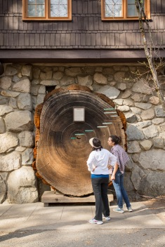 Tourists looking at tree line time line outside museum in Yosemite Valley.
