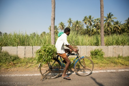 Indian man riding bike down road with greens tied to the back in Hampi, India.