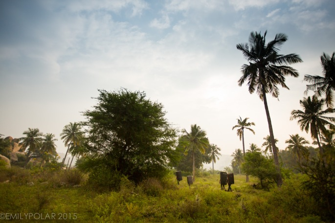 Climbers with crashpads walking along trail through palm trees to Land's End Boulders in Hampi, India.