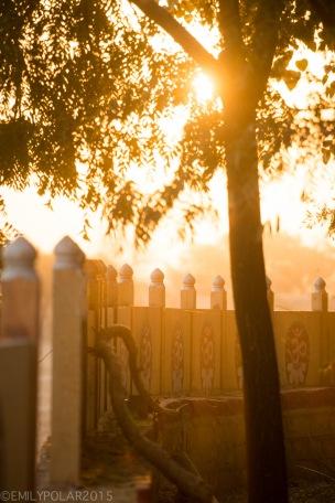 Golden morning sun shinning through trees at Amar Sagar Temple complex in Jaisalmer.