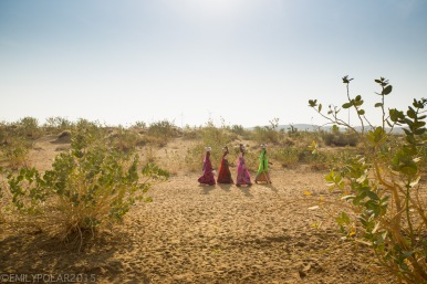 Colorful women of Rajasthan carrying water on top of their heads through the Thar desert.