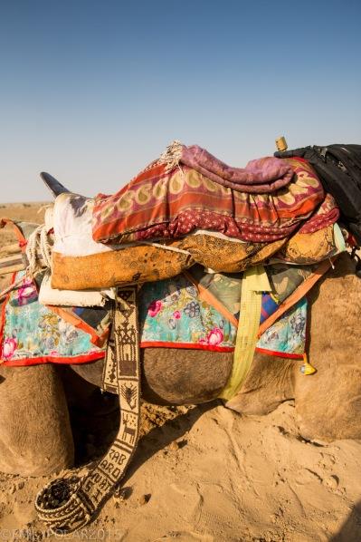 Jaisalmer_Camel_Safari_141202-294