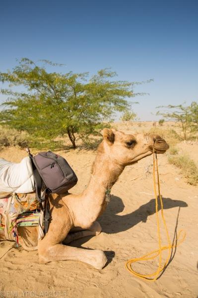 Jaisalmer_Camel_Safari_141203-267