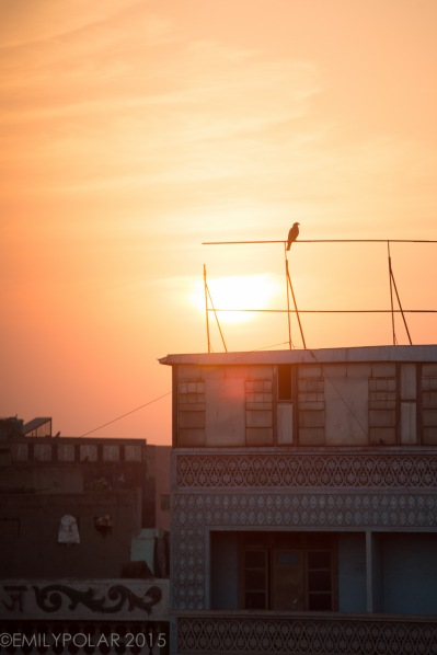 Birds hanging out perched on wire bars golden at sunset on top of old hotels in Old Delhi, India.