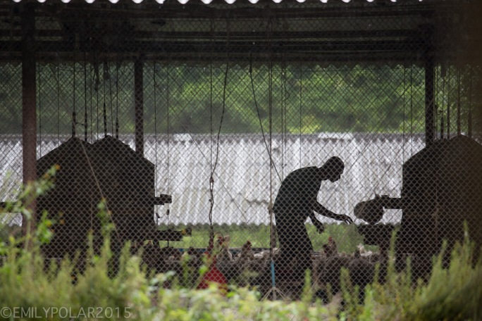 Sillouette of a man working in a chicken coop in rural Nepal.