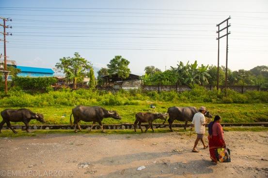 Pokhara_Transit_121002-068