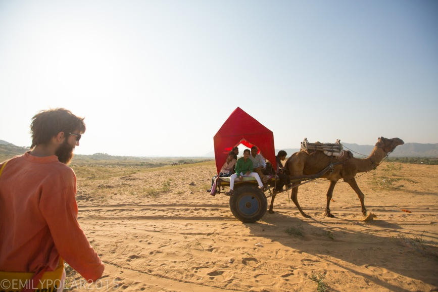 Local Indian men ride in cart being pulled by a camel in the desert in Pushkar, India.