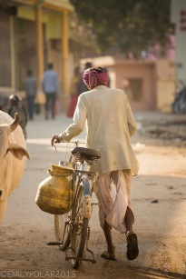 Indian man walking bicycle down a dusty street in the glow of morning light past a big ox in town Pushkar.