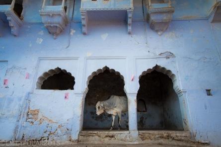 Pushkar_141124-288