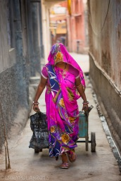 Indian woman covered in a colorful sari pulling a cart down an alley in Pushkar, Rajasthan.