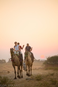 Tourists riding camels in the desert at sunset outside of Pushkar in Rajasthan.