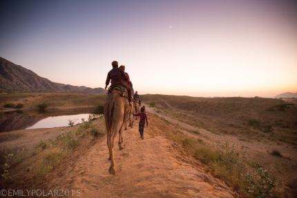 Tourists on camel tour ride at sunset in the desert near Pushkar, Rajasthan.