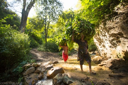 Women carrying bundles of green leaves on top of their heads across a small stream along a trail in the forest near Rishikesh.