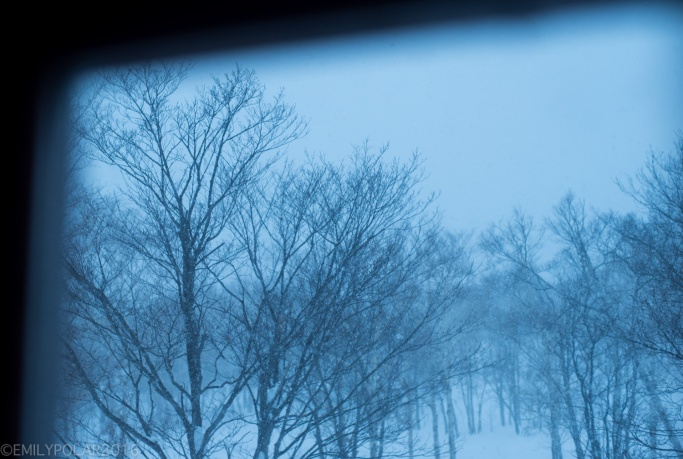 View of the morning light and trees outside the cabin window in Niseko, Japan.
