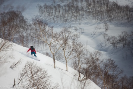 Snowboarder making turns in fresh powder in the backcountry trees of Niseko, Japan.