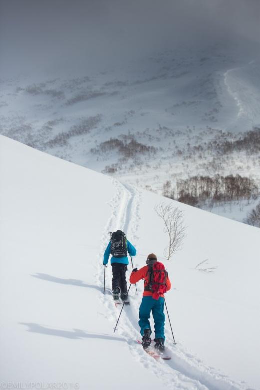 Snowboarders skinning up skin track in the backcountry of Niseko, Japan.