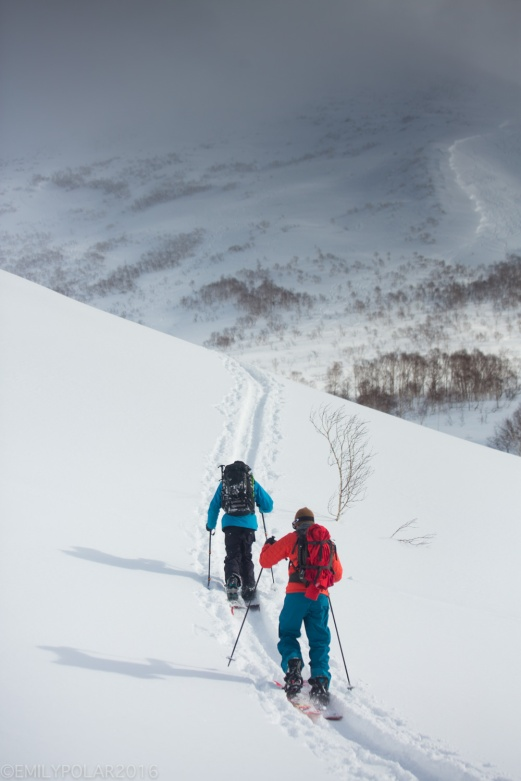 Snowboarders skinning up skin track in the backcountry of Niseko, Japan.
