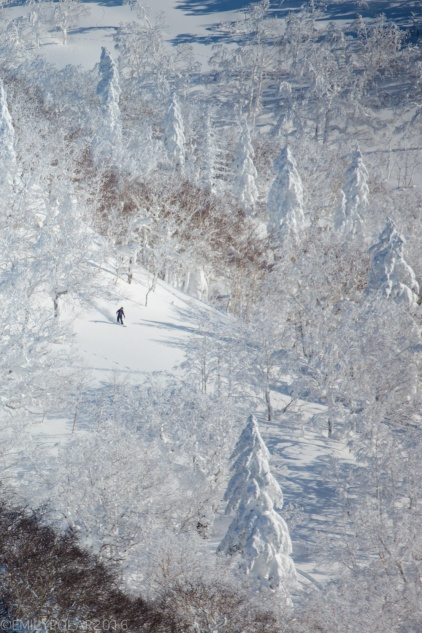 Snowboarder making fresh turns in the trees of a frosty frozen Japan landscape at Kiroro Resort.