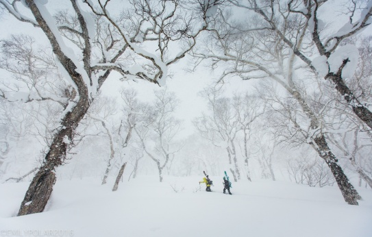 Man and woman snowshoeing with their snowboards on their backpacks in the beautiful snowy forests of Niimi backcountry in Hokkaido, Japan.