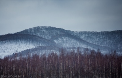 Beautiful trees cover the rolling hilly landscape of snowy Niseko, Japan.