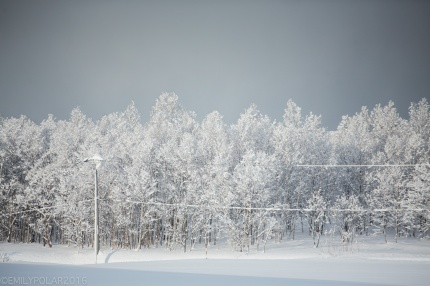 Fresh powder snow covers the trees and whole landscape in a blanket of white in Niseko, Japan.