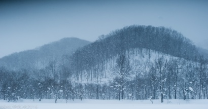 Beautiful trees cover the snowy rolling hilly landscape of Niseko, Japan.