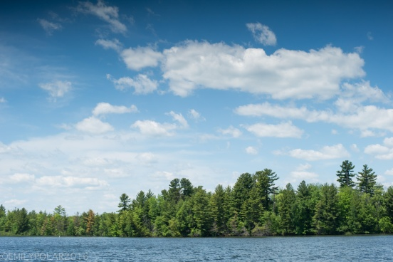 Blue skies and pine trees along the lake shore of Moshawquit Lake in Wisconsin.