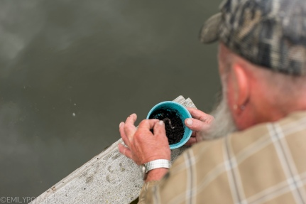 Dad feeding worms to the fish in the pond off his dock on the land in Wisconsin.