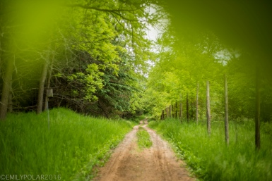 Dirt tractor road leading into the green forest in summer time in Wisconsin.