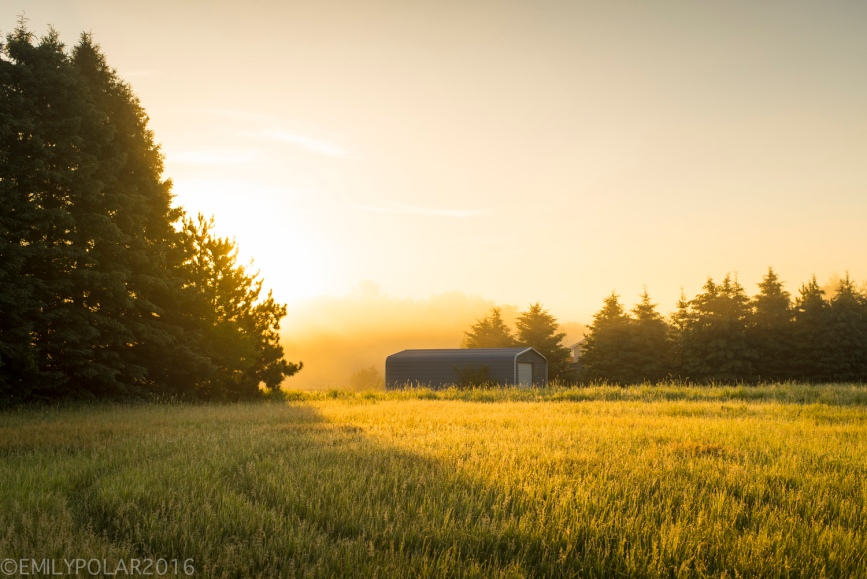 Golden sunrise morning lights up the trees and a grassy meadow in the rural fields of Wisconsin.