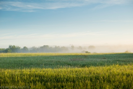 Cool blue and foggy sunrise morning in the rural country lands of Wisconsin.