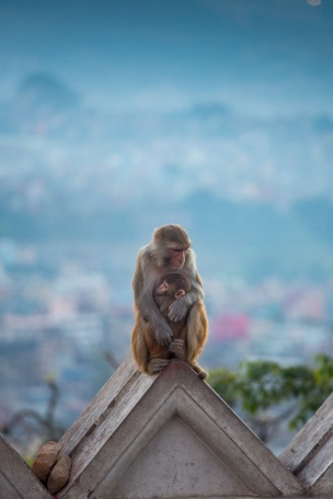 Swayambhunath_161106-69