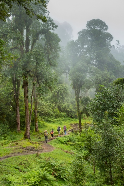 People trekking along trail through lush and green foggy forest in the Annapurna Conservation, Nepal.