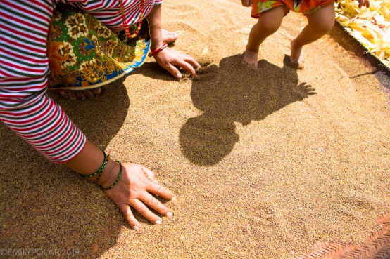 Mother fans out the seasons crop of millet to dry in sun with the help of her little boys feet. You can see this popular staple grain being grown in the lower areas of Nepal.