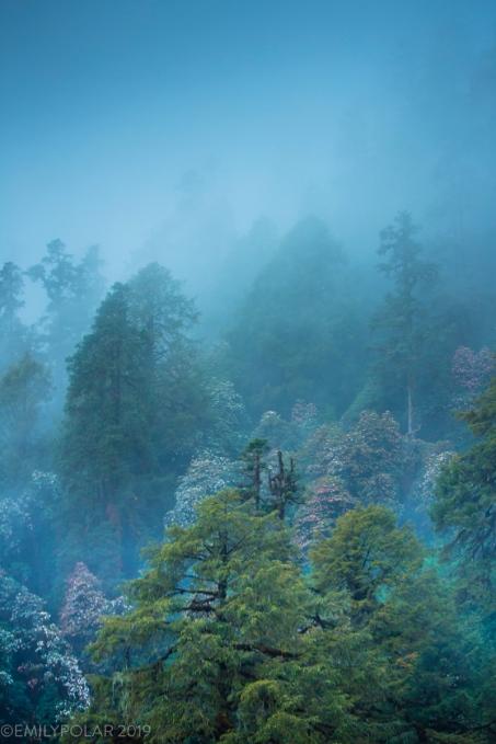 Melamchighyang_180403-307