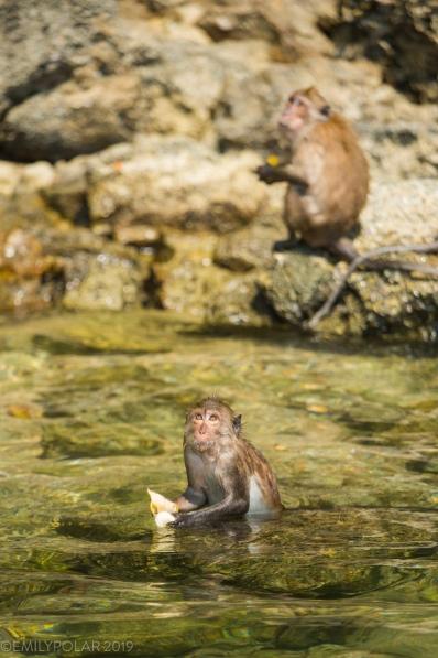 Monkey_Island_190115-14