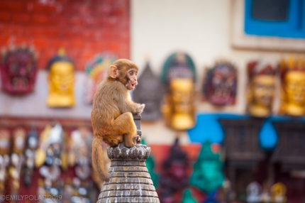 Swayambhunath is a sacred site in Kathmandu valley also known as the Monkey Temple. Many monkeys call this area home as the stupa sits atop a large forested hill making it a good base for them in the city. The little monkey pictured here is calling out for his mother who showed up moments after I took this photo.