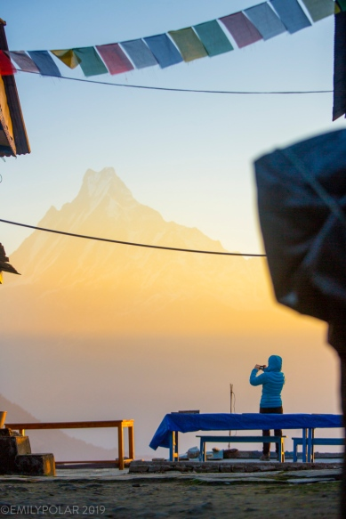 Tourist takes a photo of Machapuchare mountain at sunrise from Tadapani in the Annapurna region, Nepal.