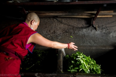 Nun washing greens from the garden at Thubten Choling monastery in the rural Khumbu, Nepal.